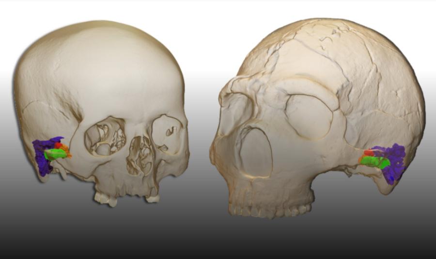 Neandertalczycy mogli komunikować się podobnie jak współcześni ludzie