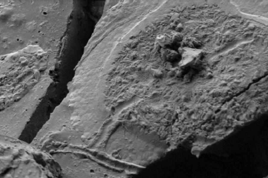 Naukowcy znaleźli dobrze zachowane neurony w zeszklonym mózgu ofiary erupcji Wezuwiusza