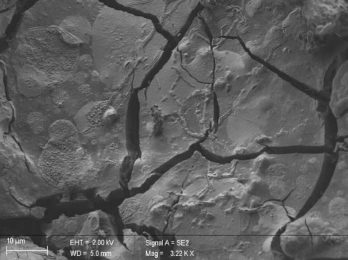 Neurony odkryte w zeszklonym mózgu ofiary Wezuwiusza