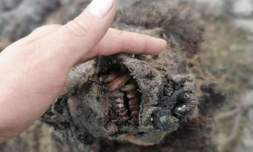 Znaleziono doskonale zachowane ciało niedźwiedzia jaskiniowego