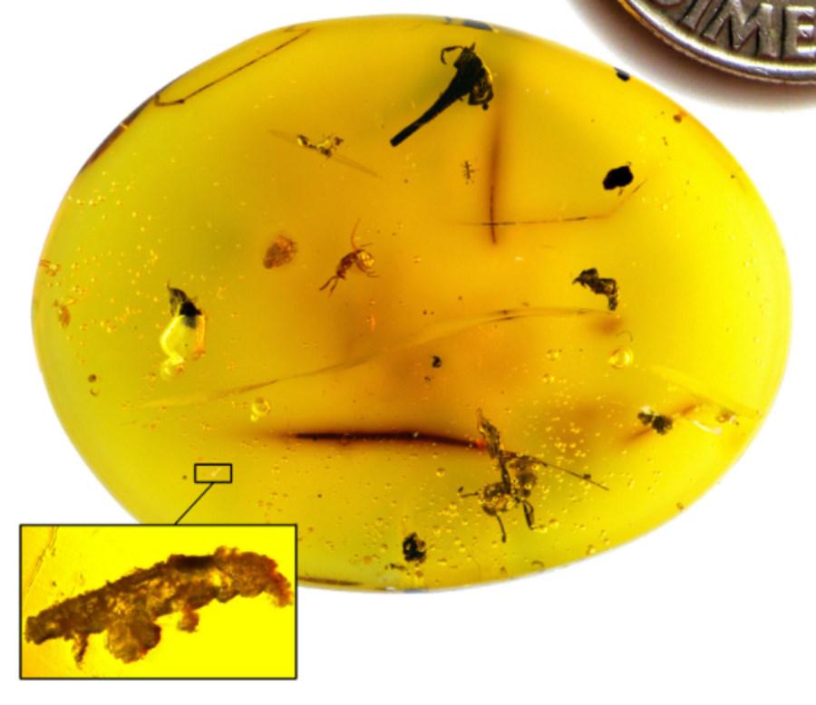 Niesporczak sprzed 16 milionów lat zatopiony w bursztynie