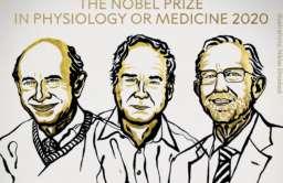 Przyznano Nagrodę Nobla 2020 z medycyny i fizjologii