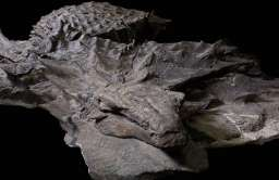 Skamielina nodozaura