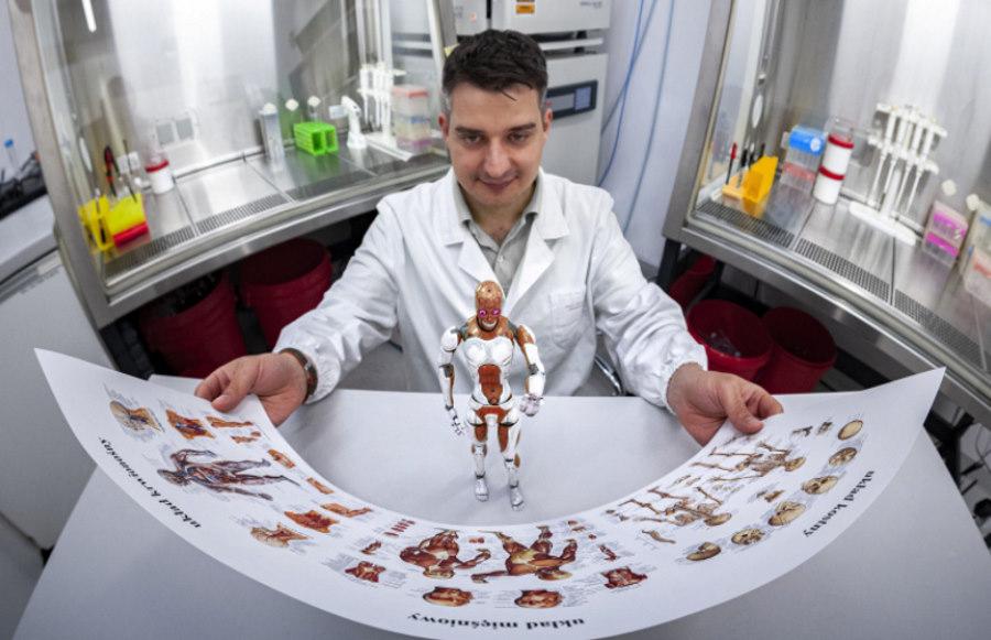 W IChF PAN mają sposób na skuteczną odbudowę mięśni szkieletowych