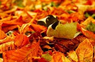 Pozostawianie opadłych liści daje wiele korzyści przyrodniczych