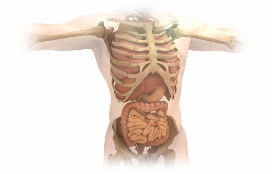 W jakim wieku są nasze narządy wewnętrzne?