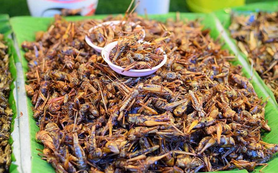 Alternatywne źródło żywności - owady