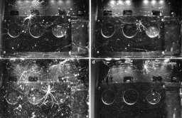 Eksperyment z pająkami na ISS. Niespodziewane odkrycie po serii wpadek