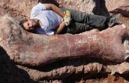 Kość Patagotitan mayorum – największego dinozaura świata
