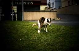Pies podczas defekowania
