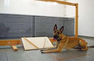 Psy potrafią rozpoznać intencje człowieka
