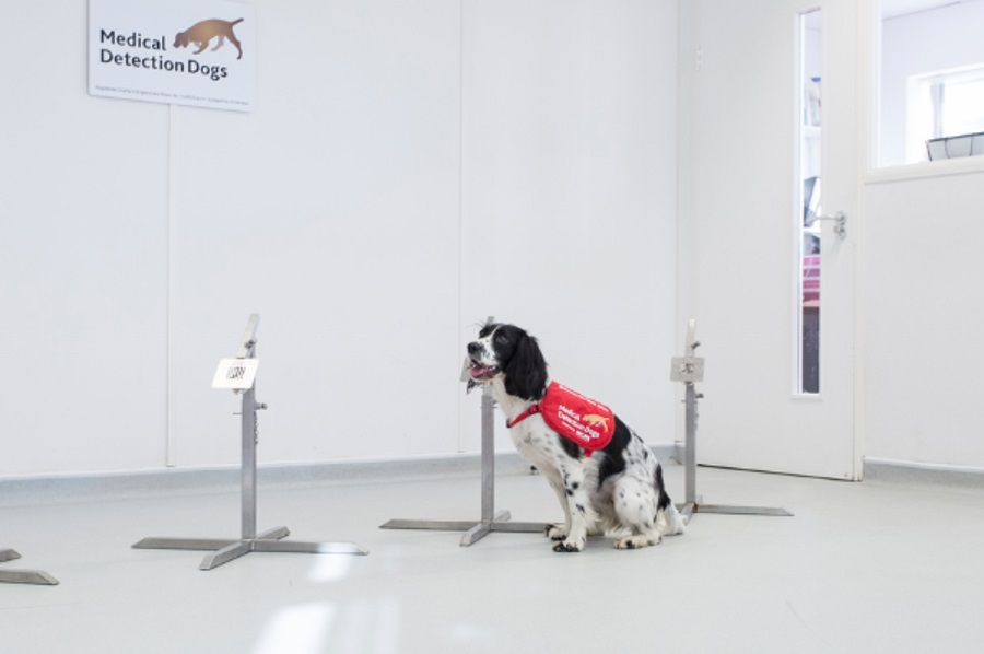 Psy mogą zdiagnozować malarię