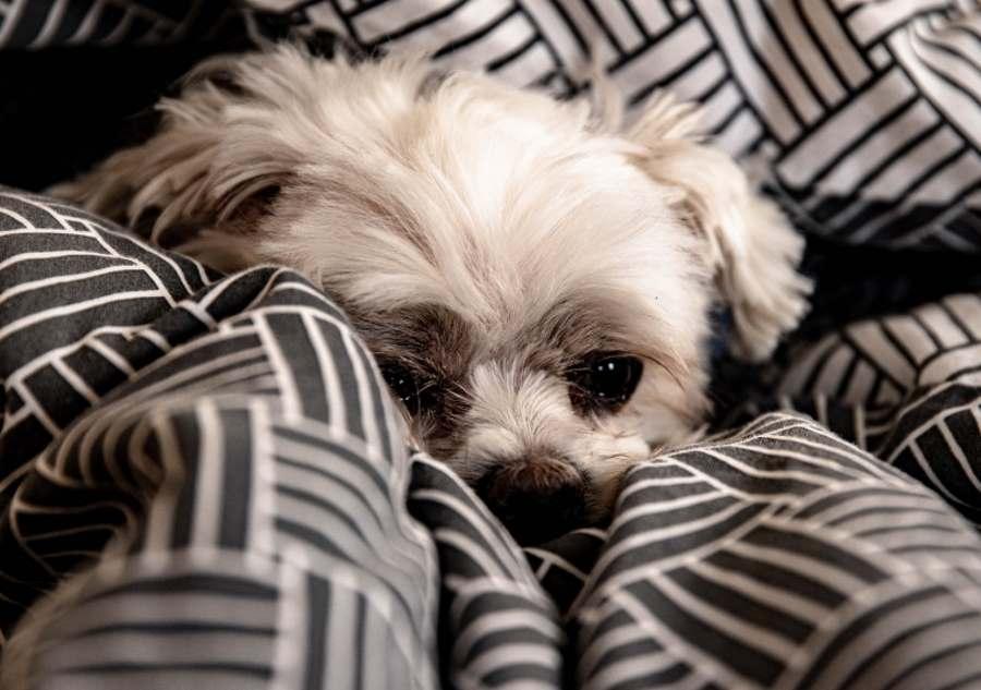 Posłanie dla psa – czy jest potrzebne?