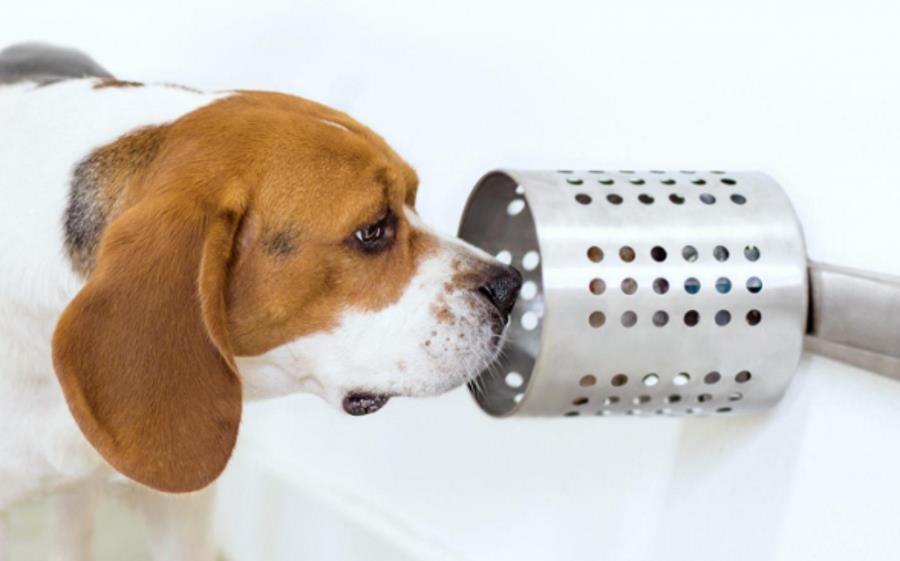 Psy mogą wyczuć raka próbkach krwi