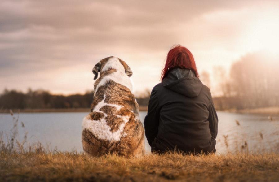 Pies to najstarszy towarzysz człowieka. Nasza wspólna historia zaczęła się co najmniej 11 tys. lat temu