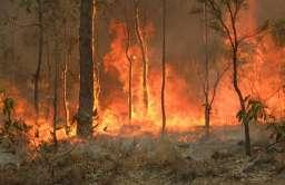 W australijskich pożarach buszu zginęło blisko pół miliarda zwierząt