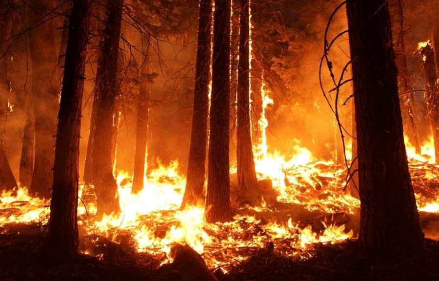 Znalezione obrazy dla zapytania lasy deszczowe płoną