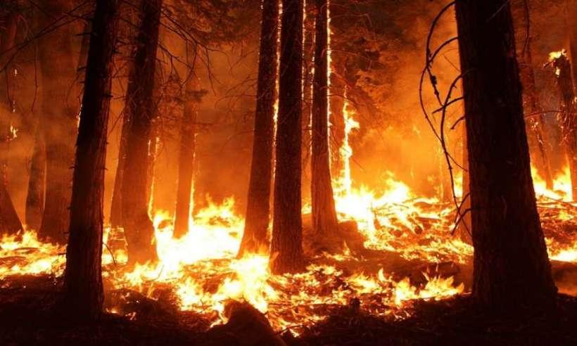Lasy deszczowe Amazonii płoną w rekordowym tempie. Dym zasłonił Słońce nad Sao Paulo