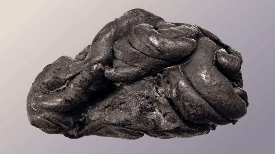 """DNA wydobyte z """"gumy do żucia"""" sprzed 5700 lat"""