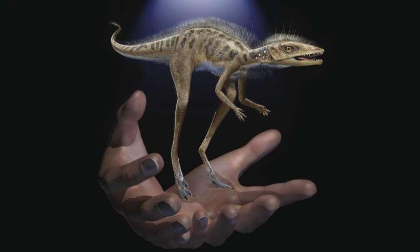 Przodek dinozaurów żywił się owadami i był niewiele większy od chomika
