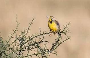 Liczba ptaków w USA i Kanadzie spadła o 3 miliardy w ciągu 50 lat