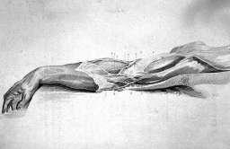 Ręka - anatomia