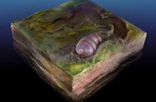 Skamielina robaka sprzed 555 mln lat może należeć do przodka wszystkich zwierząt
