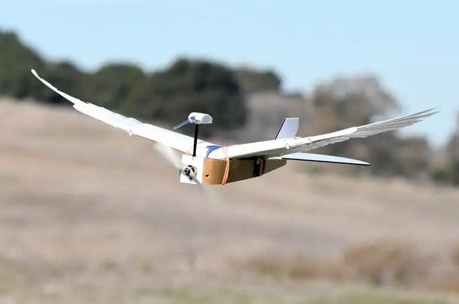 Robot z piórami gołębia lata niczym żywy ptak