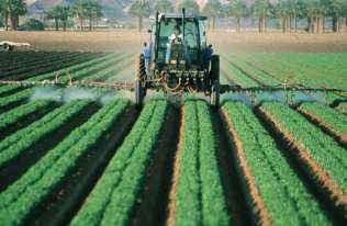 Powszechnie stosowane pestycydy mogą przyczyniać się do epidemii otyłości