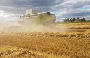 SARS-CoV-2 może stwarzać zagrożenie dla rolnictwa