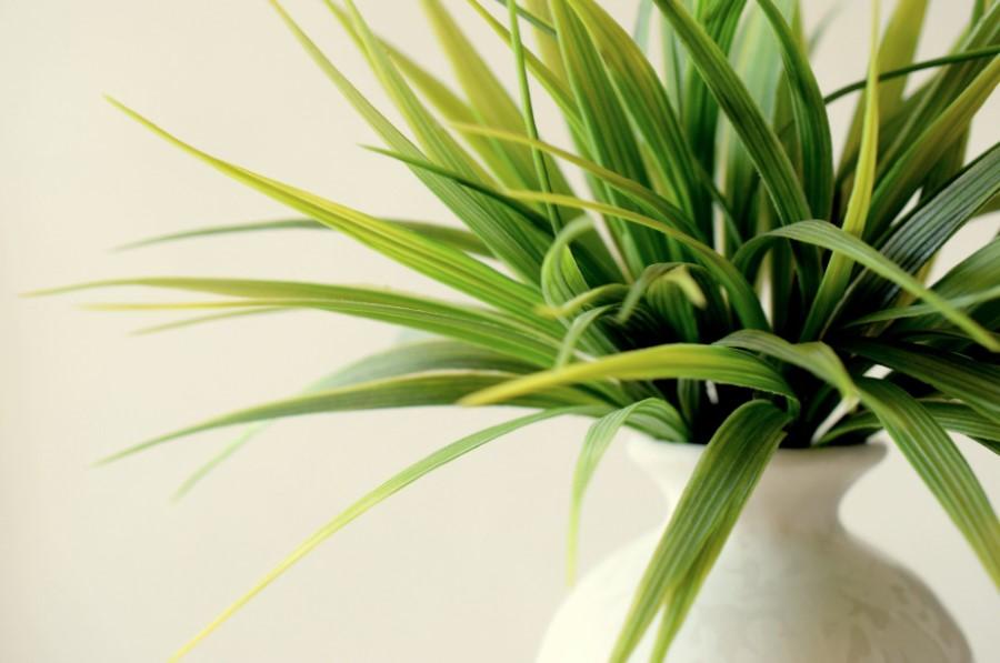 Rośliny doniczkowe nie poprawiają jakości powietrza w pomieszczeniu
