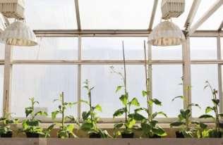 Wzrost roślin