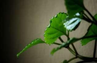 Rośliny w pomieszczeniach poprawiają jakość powietrza