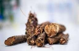Roślina, której lecznicze działanie było znane już 1200 lat temu, zostanie przebadana przez naukowców z PB