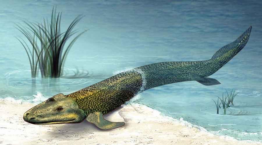 Mnóstwo ryb w morzu pochodzi z Wielkiej Brytanii