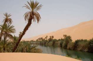 Oaza na pustyni