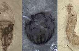 Skarbiec skamielin w pobliżu rzeki Danshui w Chinach