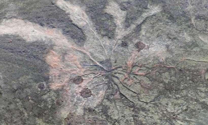 Pozostałości po najwcześniejszych drzewach na naszej planecie