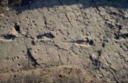 Ślady praludzi odciśnięte w skale
