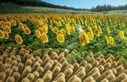 Sztuczny materiał, który wygina się w stronę światła, może poprawić osiągi paneli słonecznych