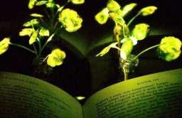 Świecące rośliny