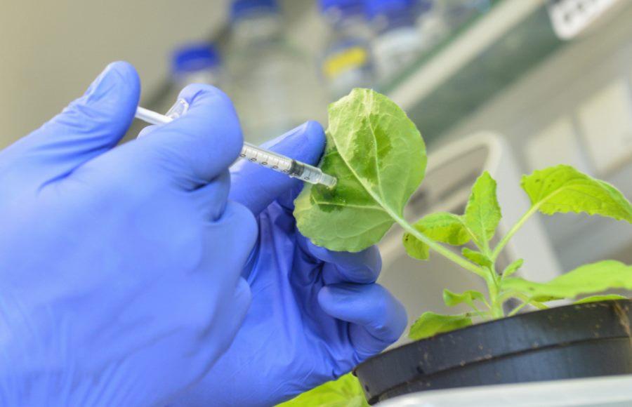 Szczepionka dla roślin