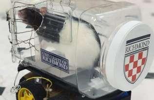 Szczur w samochodzie - badanie naukowe