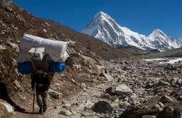 Szerpa niosący bagaż w Himalajach
