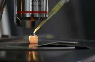 Ząb pod mikroskopem