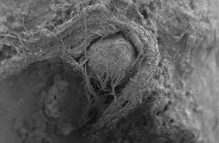 Neandertalczycy potrafili wytwarzać liny? Archeolodzy znaleźli fragment sznurka sprzed około 50 tys. lat