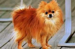 Pies zarażony SARS-CoV-2 od człowieka. Pierwszy potwierdzony przypadek