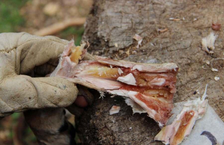 Pradawni ludzie traktowali kości jak puszki, które chroniły szpik kostny do późniejszego spożycia