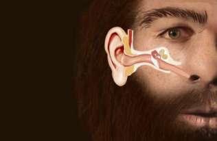 Neandertalczycy wyginęli przez zapalenie ucha?