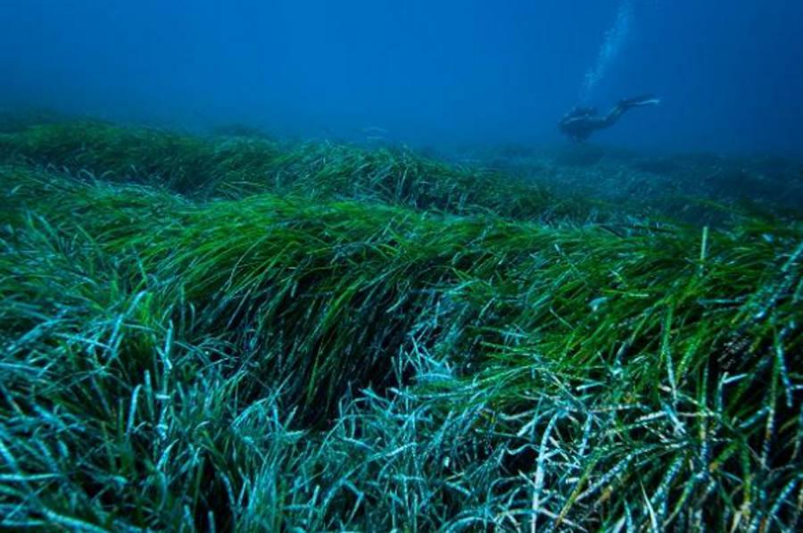 Roślina, która potrafi usuwać z morza plastikowe odpadki